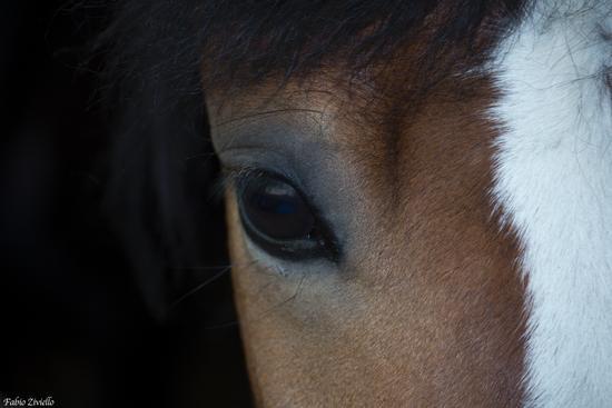 Occhio del Cavallo Selvaggio (388 clic)