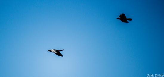 Uccelli nel cielo (572 clic)