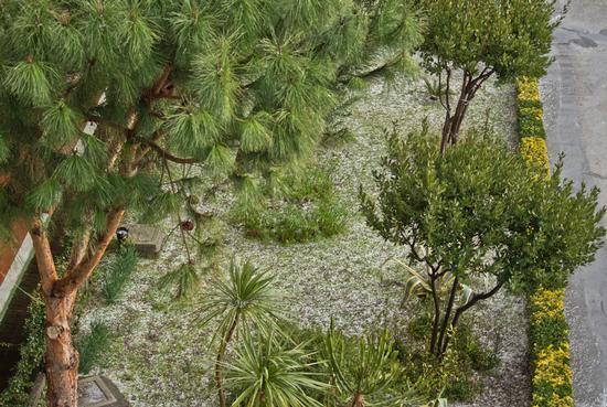 Oggi nevica - Ercolano (1401 clic)