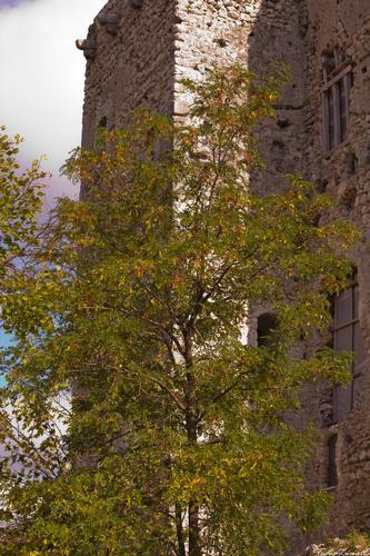 Castello con albero - Montella (1517 clic)