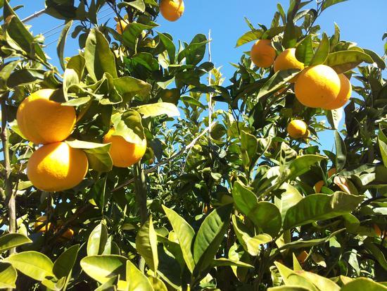 arance - San cataldo (2641 clic)