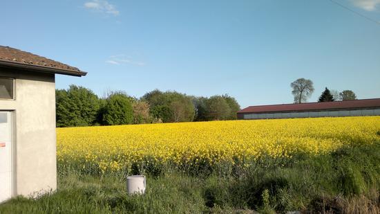 Campo coltivato - Cremona (1099 clic)