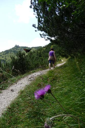 Maniva - Farfalla in atterraggio - San colombano (935 clic)
