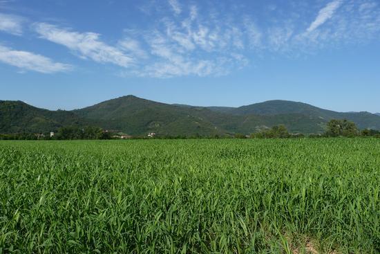 coltivazioni - Rodengo saiano (923 clic)
