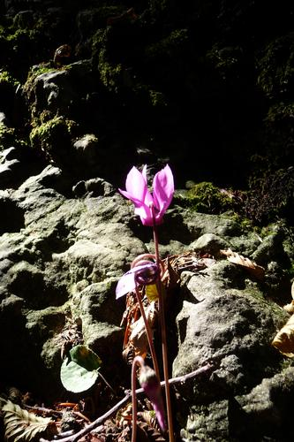 Raggio di sole nel bosco - Bione (1540 clic)