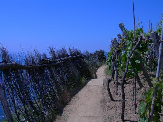 sentiero - Cinque terre (2130 clic)