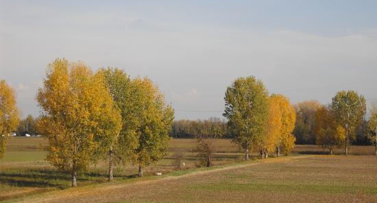 autunno - Corneliano bertario (1488 clic)