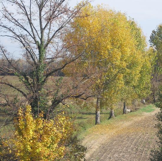 autunno - Corneliano bertario (1200 clic)