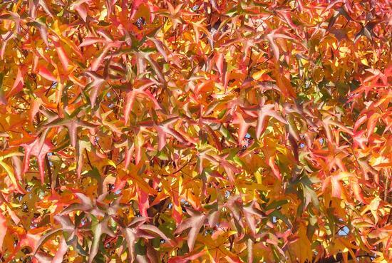i colori dell'autunno - Rivolta d'adda (1439 clic)