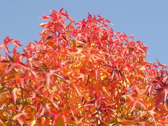 i colori dell'autunno - Rivolta d'adda (1592 clic)