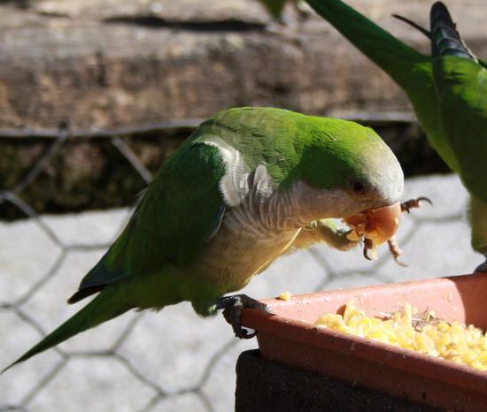 buon appetito! - Ponte san pietro (1369 clic)