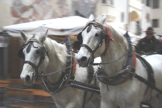 cavalli in corsa - Bolzano (1867 clic)