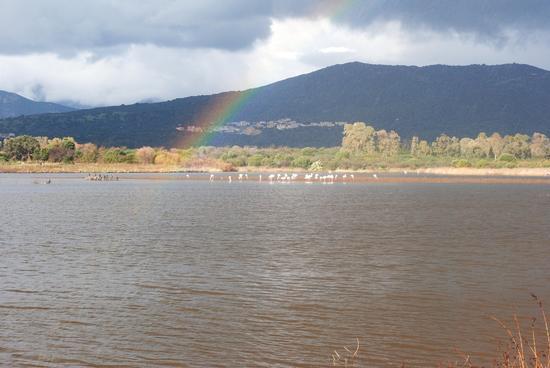 Fenicotteri rosa ed altri con arcobaleno - Budoni (2356 clic)