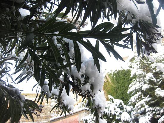 La prima neve dell'anno... - Petralia sottana (1791 clic)