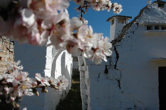 PRIMAVERA 4 - Alberobello (1890 clic)