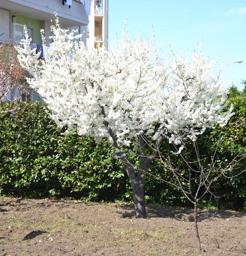 Primavera - (497 clic)