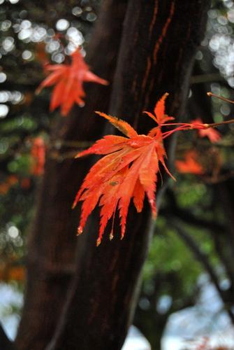 piccole foglie  - Verbania (1717 clic)