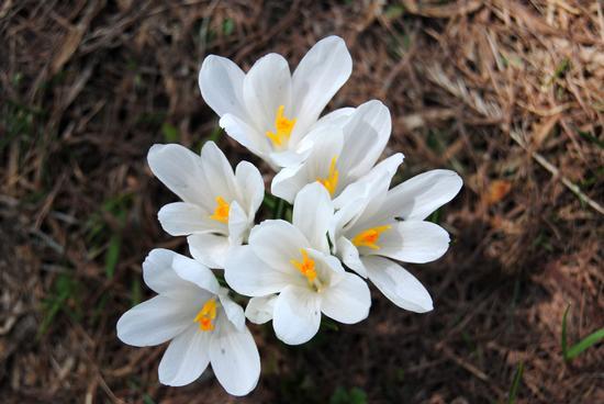 arriva la primavera - Bognanco (1558 clic)