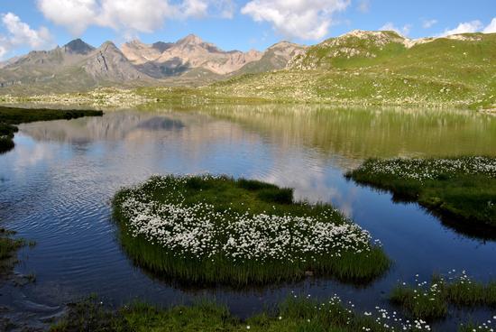 fioriture alte. - Formazza (1325 clic)