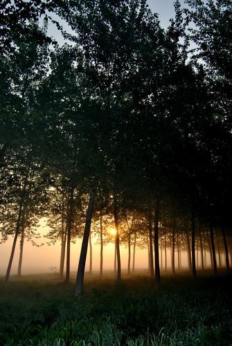 nebbie primaverili nell'alba sulla pianura padana - Corte de' frati (2181 clic)