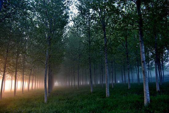 nebbie primaverili nell'alba sulla pianura padana - Corte de' frati (2557 clic)