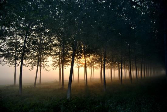 nebbie primaverili nell'alba sulla pianura padana - Corte de' frati (2712 clic)