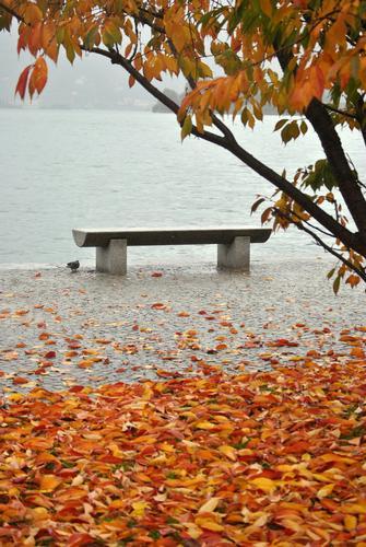 Visioni d'autunno sul Lago Maggiore - Verbania (2218 clic)