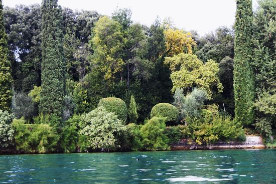 Vegetazione del Garda - San felice del benaco (1291 clic)