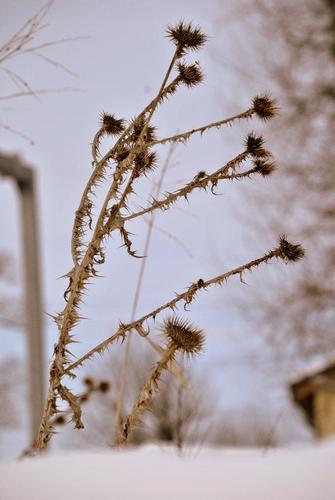 L'erbaccia è una pianta di cui non sono state ancora scoperte le virtù. - Bologna (1756 clic)