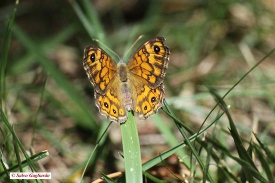 Siesta della Farfalla - Cefalù (2391 clic)