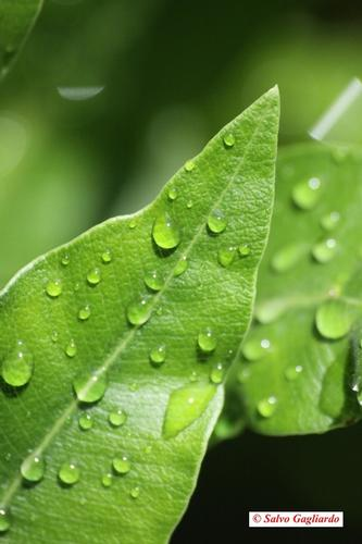 Dopo la pioggia - Cefalù (2107 clic)