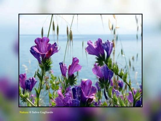 Natura - Sant'elia (3055 clic)