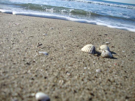 conchiglie solitarie - Marina di grosseto (1645 clic)