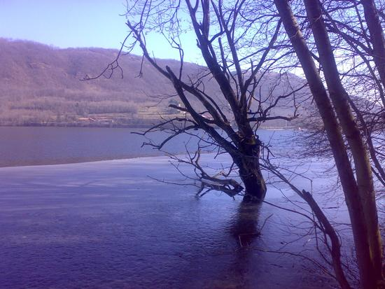 alberi annegano al lago piccolo - Avigliana (1421 clic)