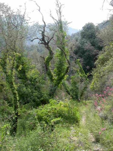 Sentiero - Dolceacqua (3629 clic)
