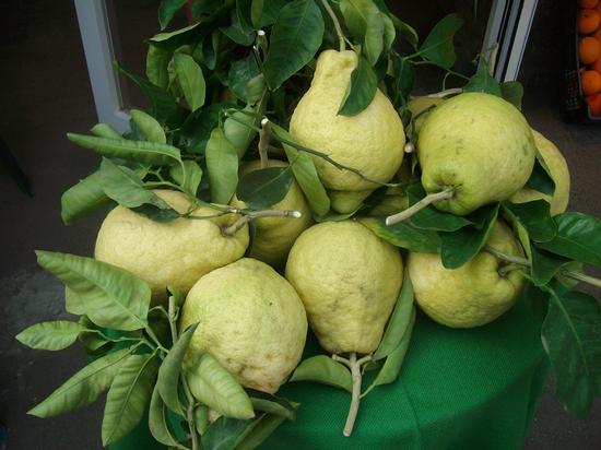 Limoni di SORRENTO (482 clic)