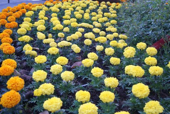 fiori (380 clic)