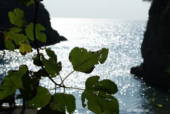 Angolo costiera sorrentina (202 clic)