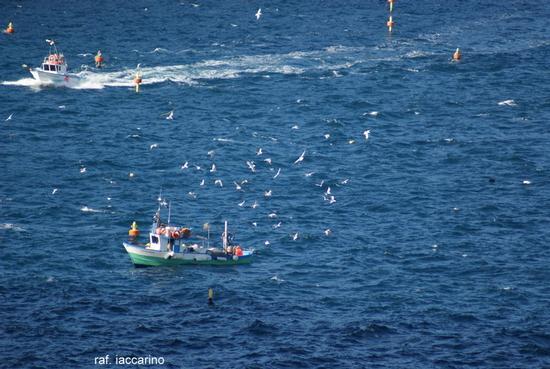 Pesca in alto mare (1140 clic)