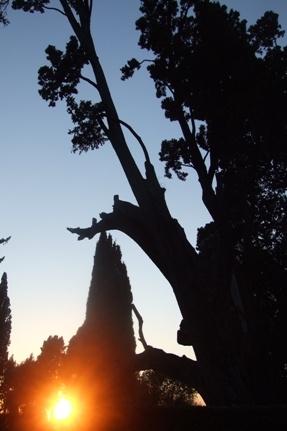Villa d'Este - Tivoli (2362 clic)