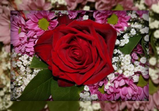 rosa........... - Caravaggio (1211 clic)