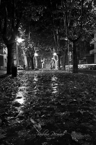 Dopo la pioggia... - Novi ligure (1651 clic)