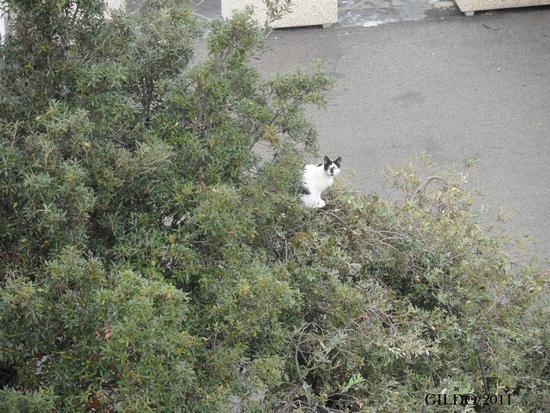 A caccia di nidi - Gaeta (2049 clic)