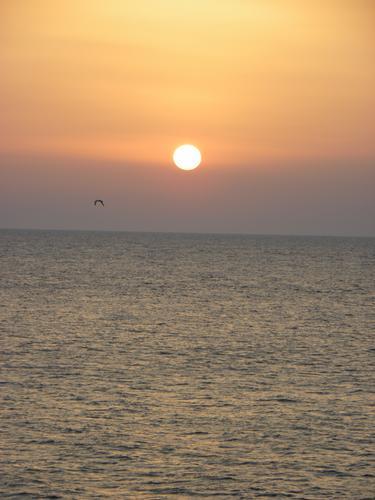 Gabbiano al tramonto - Marina di pescoluse (1590 clic)