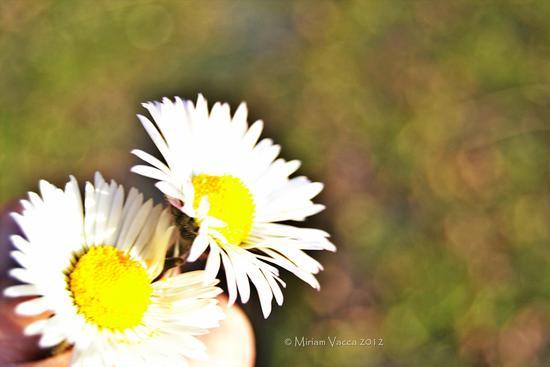 Hallo Spring!!! - Potenza (2273 clic)