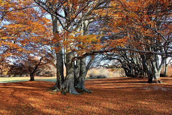 faggi e colori -riserva naturale del Canfaito - San severino marche (5670 clic)