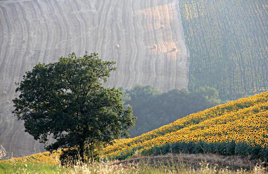 il colore dei campi - Tolentino (2172 clic)