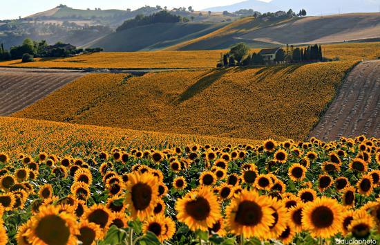 campi nel giallo - Pollenza (4953 clic)