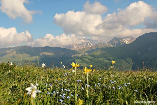 colori sui monti - Bolognola (1188 clic)