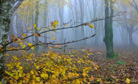 il bosco incantato (369 clic)